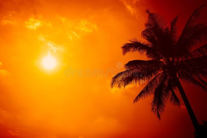 Zomer bij het strand, silhouetpalm met duidelijke zonnige hemel stock fotografie
