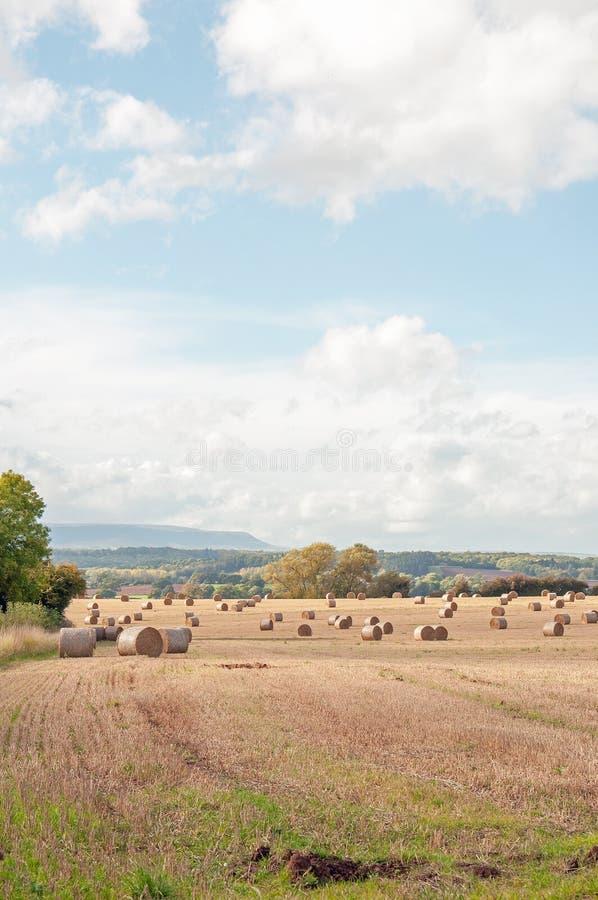 Zomer die landbouwlandschap in het Engelse platteland oogsten stock afbeelding