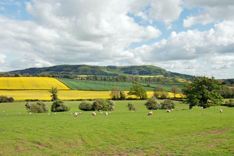 Zomer landbouwlandschap in het Britse platteland stock foto