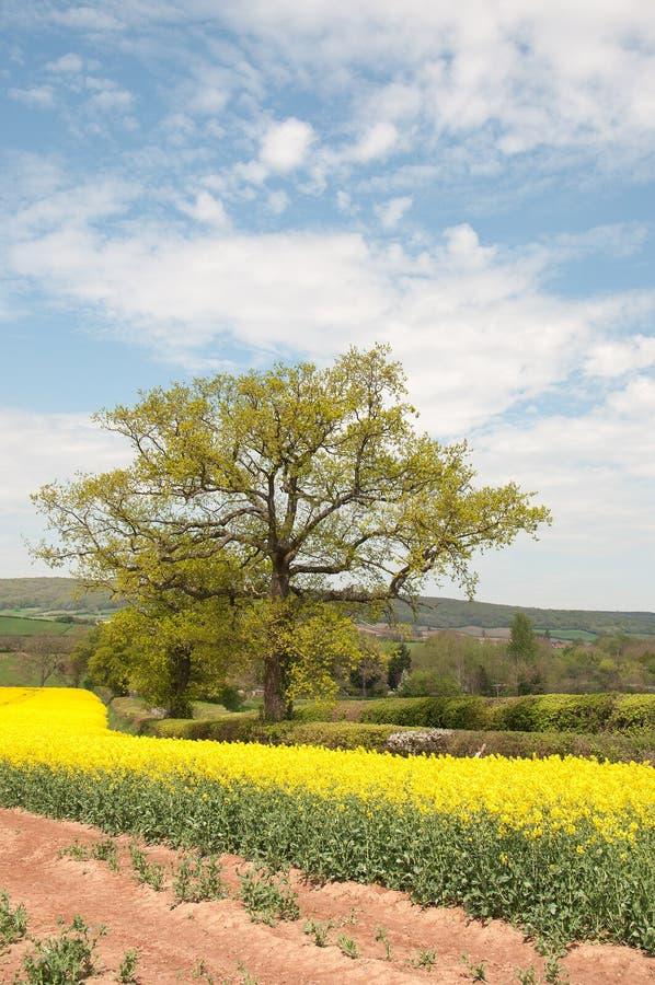 Zomer landbouwlandschap in het Britse platteland stock afbeelding