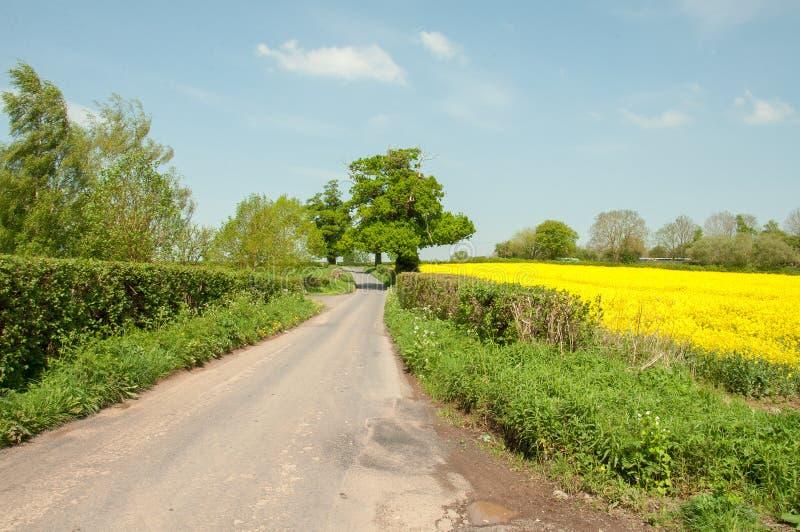 Zomer landbouwlandschap onderaan een steeg van het land in het Britse platteland stock foto