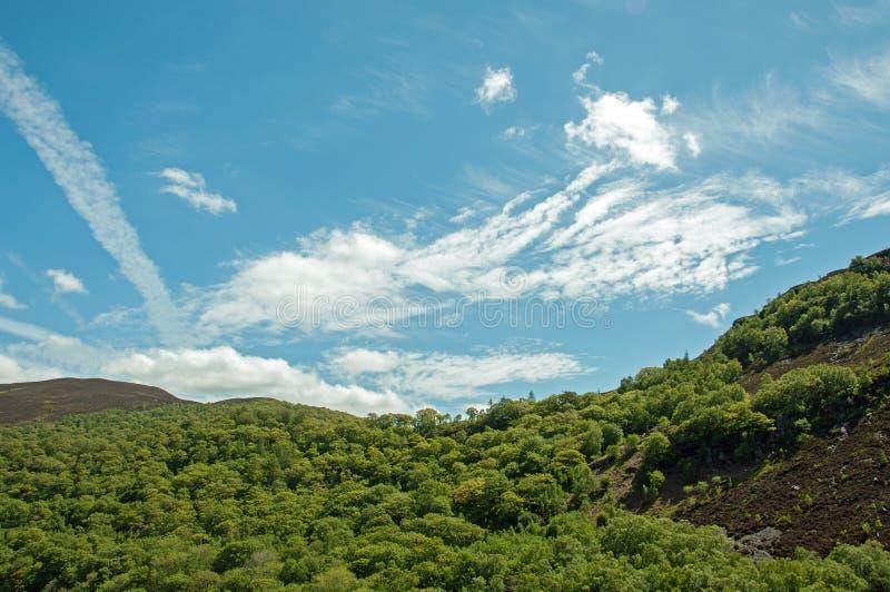 Zomerbomen langs de heuvels in het Engelse platteland van het Bos van Dean royalty-vrije stock foto's