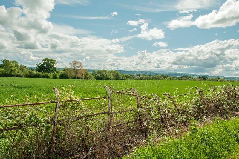 Zomerlandschap en een steile oude omheining in het Britse platteland stock afbeelding