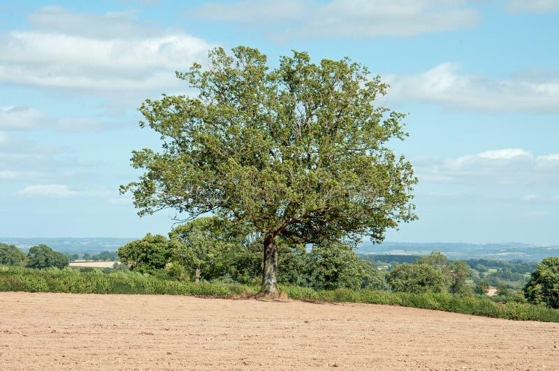 Zomerlandschap in het Britse platteland stock afbeeldingen