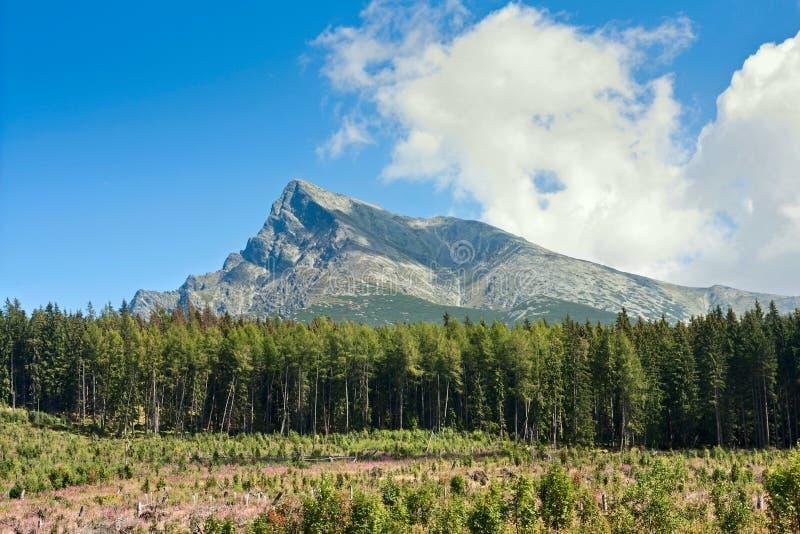 Zomerlandschap met bos die in de voorgrond tegen de achtergrond van onderstel Krivan felling in bergen Hoge Tatras stock foto's