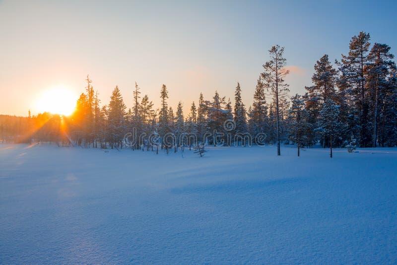 Zon bij Zonsondergang over de Winterbos royalty-vrije stock fotografie