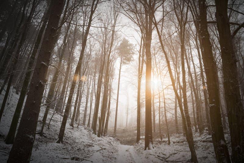 Zon die in de winter nevelig bos glanzen stock foto's