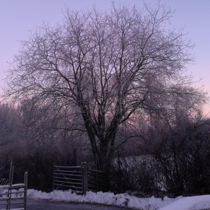 Zon die in het de Winterlandschap toenemen stock afbeeldingen