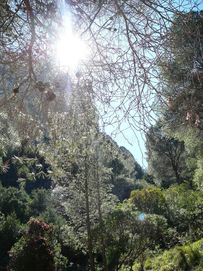 Zon die op Caminito del Rey Gorge glanzen royalty-vrije stock foto's