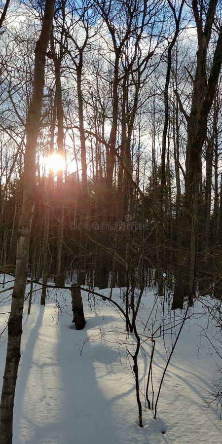 Zon door het bos stock fotografie
