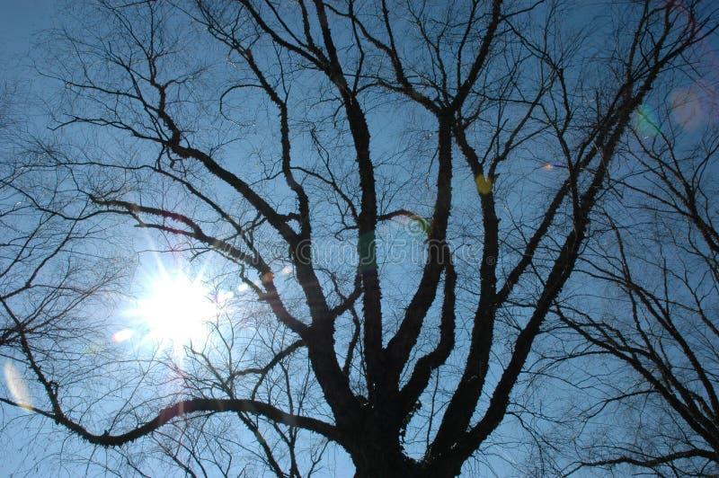 Zon en blauwe hemel stock foto's