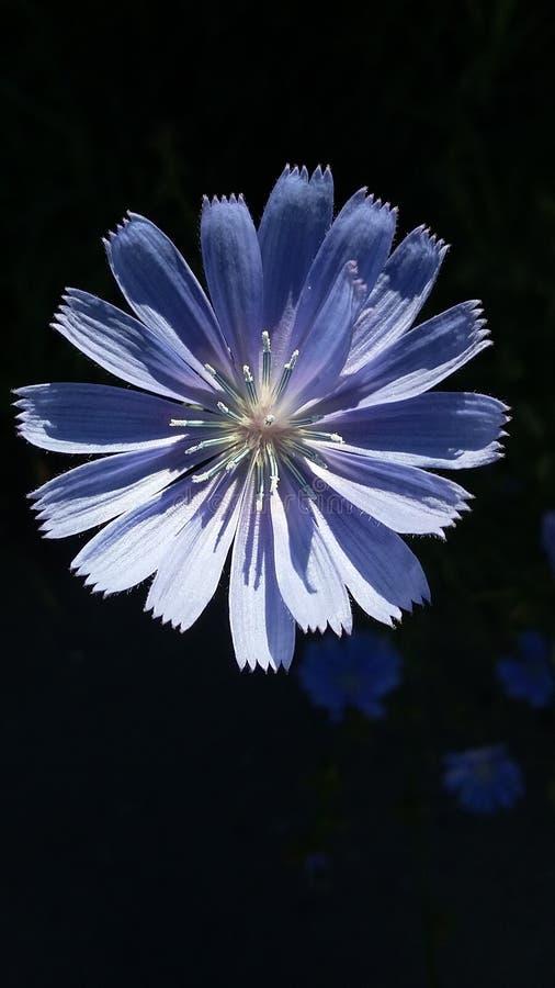 Zon en bloem royalty-vrije stock foto
