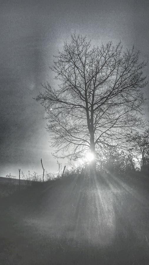 Zon en boom zwart wit stock afbeeldingen