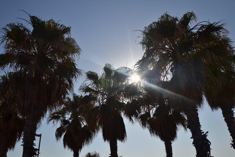 Zon en palmen stock afbeelding