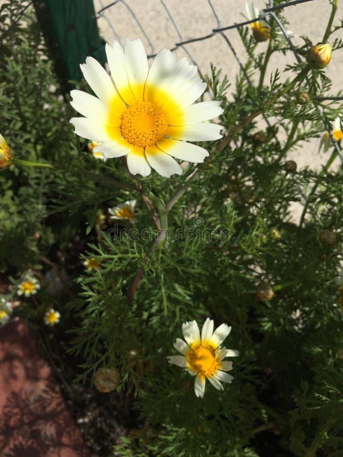 Zon en rozen stock fotografie