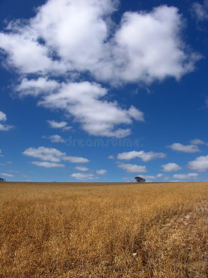 Zon Gebrand Land royalty-vrije stock fotografie