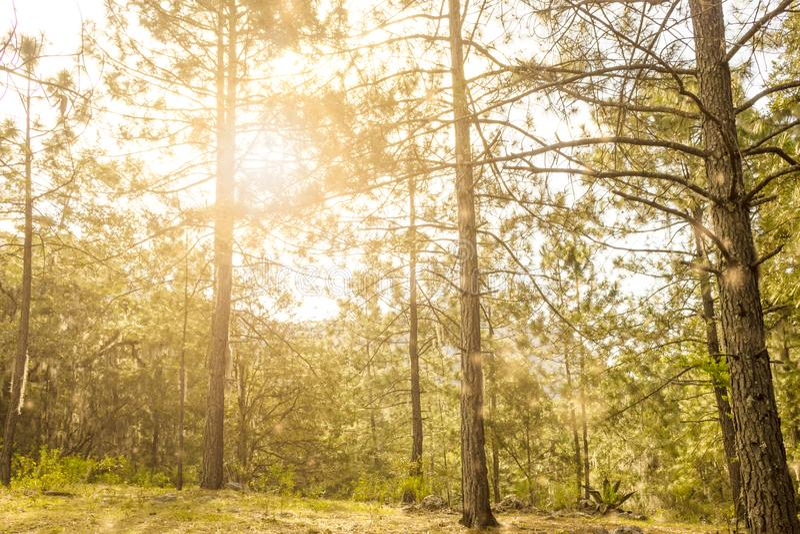 Zon glanzende trog de bosbomen royalty-vrije stock fotografie