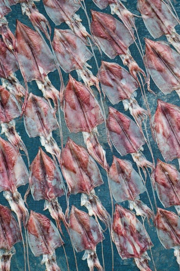 Zon het drogen pijlinktvis, Thailand stock fotografie