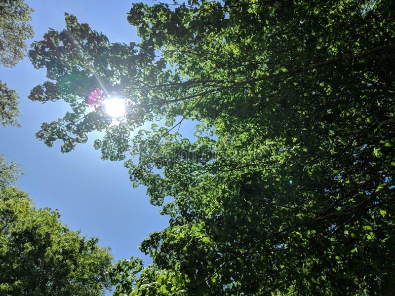Zon het Een hoogtepunt bereiken door de Bomen royalty-vrije stock afbeelding