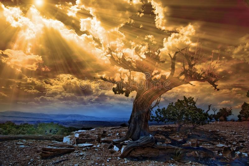 Zon lichte stromen in rotsachtige woestijnscène royalty-vrije stock fotografie