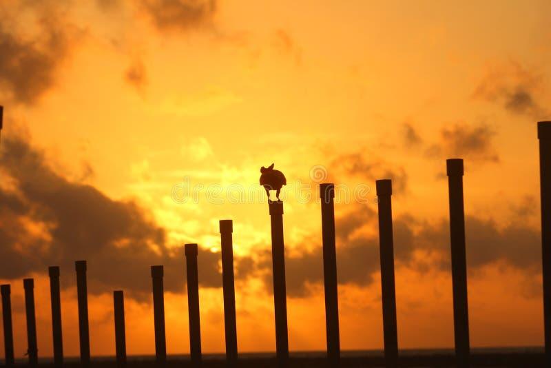 Zon met Wilderniskraai wordt geplaatst, schaafwond-Gezicht, Sri Lanka dat, stock fotografie
