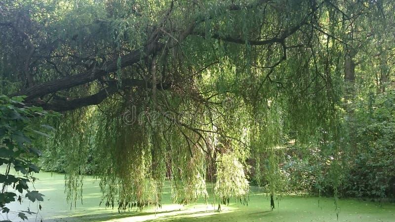 Zon tussen bomen, Tiergarten, Berlijn royalty-vrije stock foto