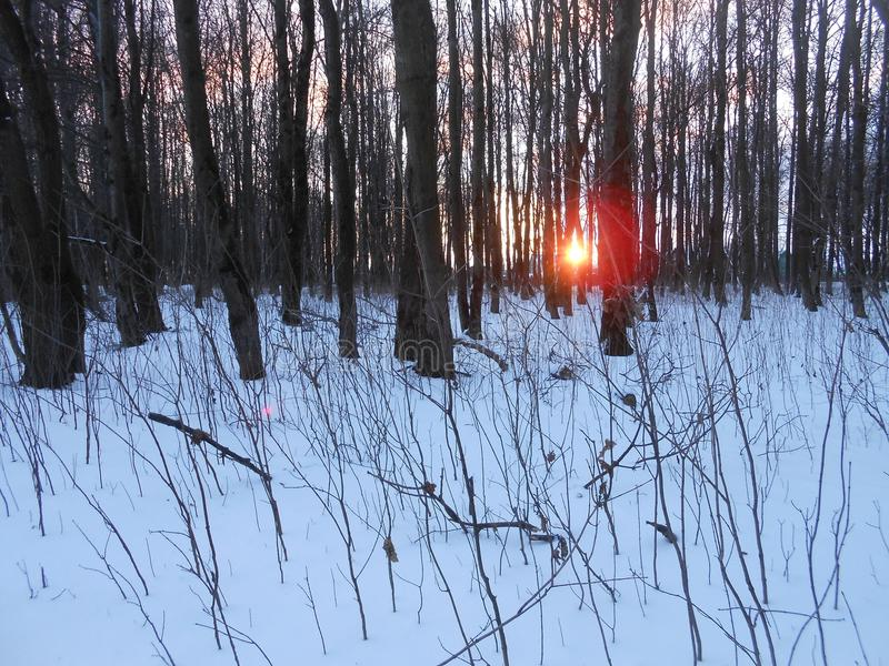 Zon tussen de bomen stock foto