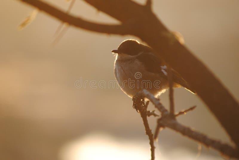 Zon-verwarmde vogel stock fotografie