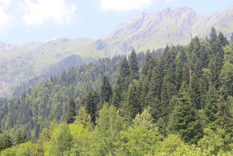 Zona di montagna con la sua bellezza della foresta fotografia stock