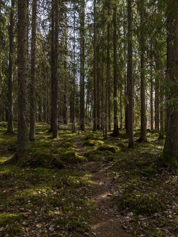 Zona florestal calma e relaxamento fotos de stock royalty free