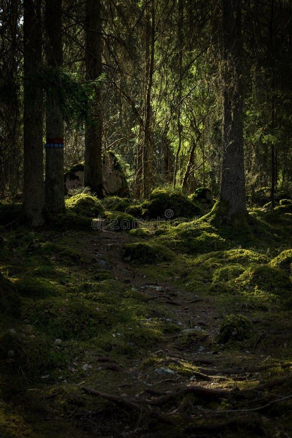 Zona florestal calma e relaxamento foto de stock