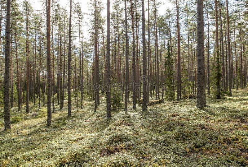 Zona florestal calma e relaxamento imagem de stock