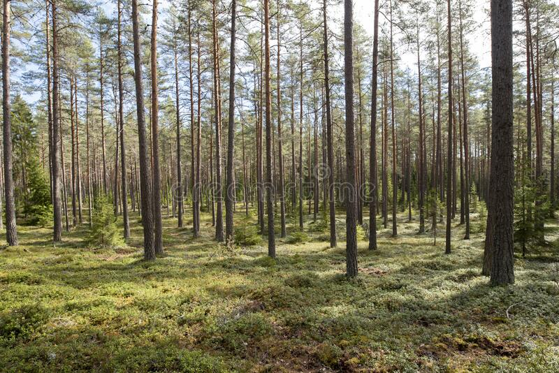 Zona florestal calma e relaxamento fotografia de stock