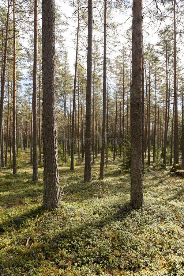 Zona florestal calma e relaxamento fotos de stock