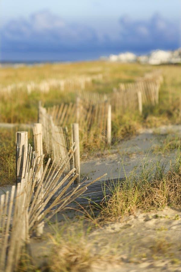 Zona naturale della spiaggia della duna di sabbia. fotografia stock libera da diritti