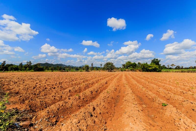 Zona produttrice della manioca nei precedenti del cielo blu fotografie stock