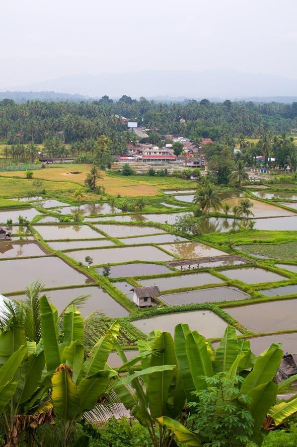 Zona rurale in Sumatra ad ovest fotografia stock libera da diritti