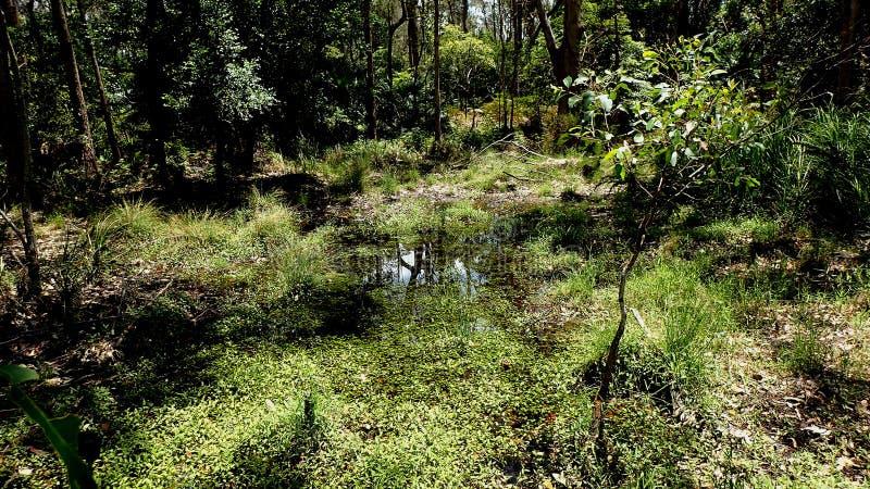 Zona umida australiana come visto da un piccolo ponte fotografia stock libera da diritti