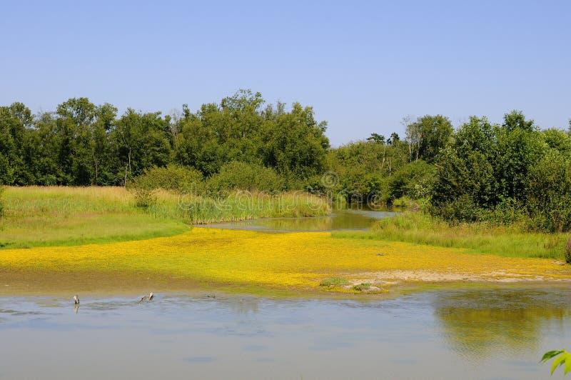 Zona umida di un santuario di uccello migratore, con i piccoli fiori gialli sulla sabbia fotografie stock libere da diritti