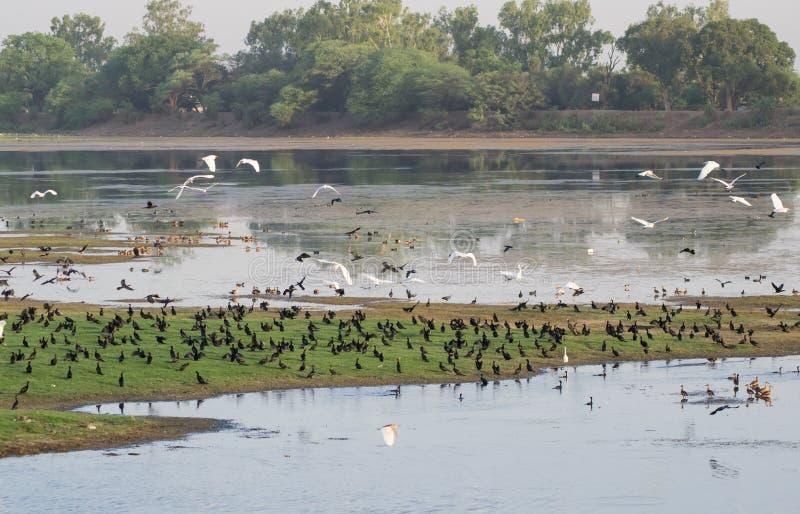 Zona umida ed uccelli India immagini stock
