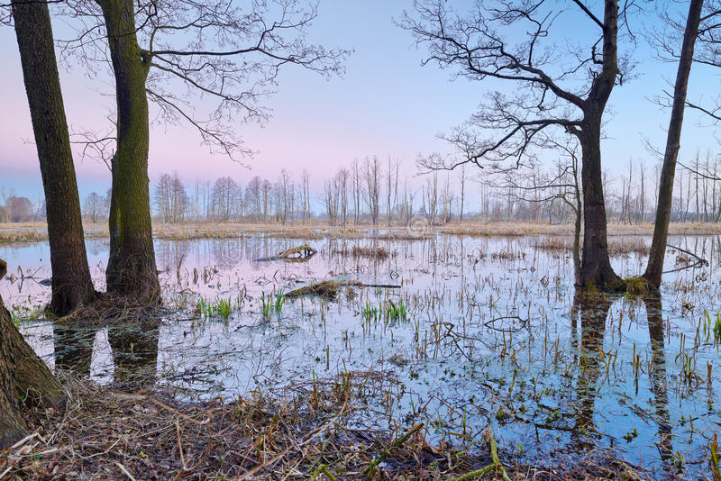 Zona umida misteriosa scenica. Riserva naturale. fotografie stock