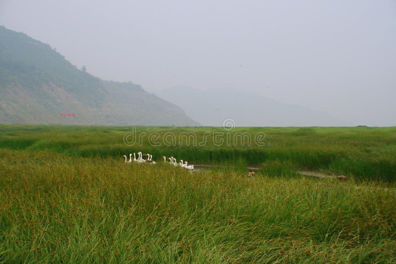 Zona umida nel fiume Giallo, Luoyang immagini stock libere da diritti