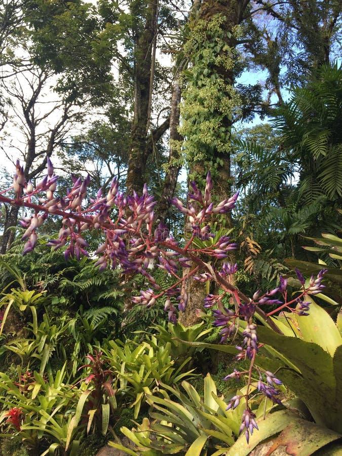 Zonas tropicales de Costa Rica fotografía de archivo