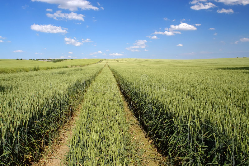 Zone arable photo stock