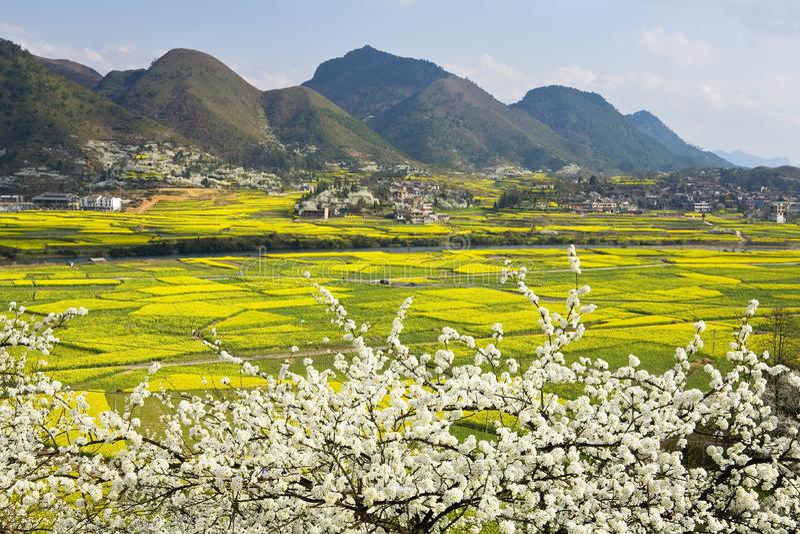 Zone au printemps images libres de droits