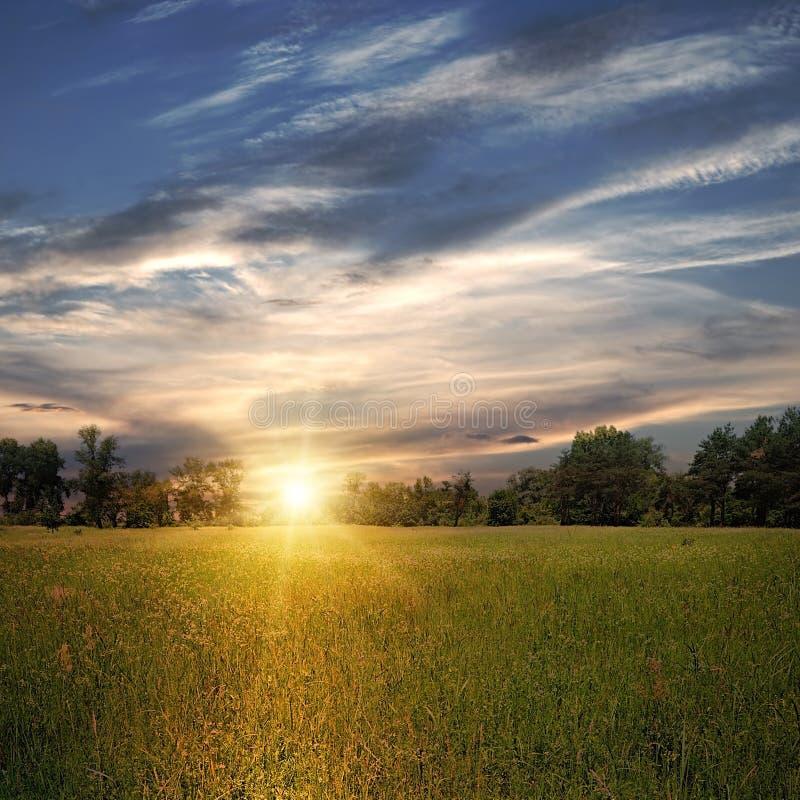 Zone avec des arbres et le coucher du soleil photo libre de droits
