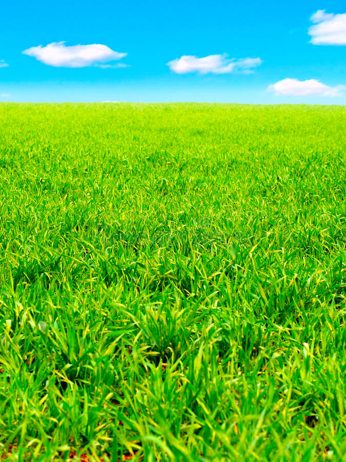 Download Zone d'été image stock. Image du ciel, nature, horizon - 56484823