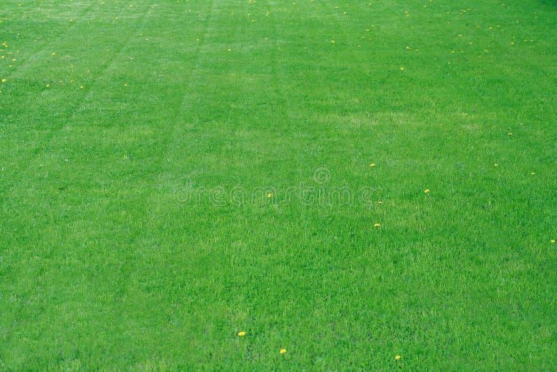 Zone d'herbe photo stock