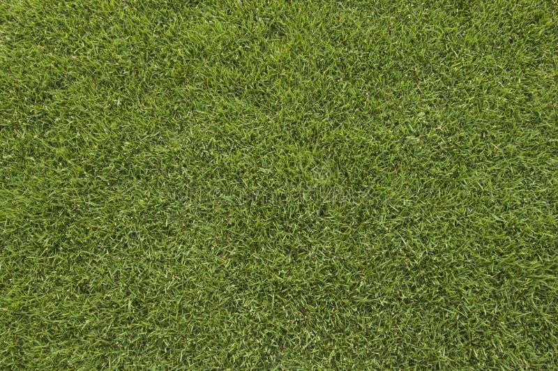 Zone d'herbe photographie stock