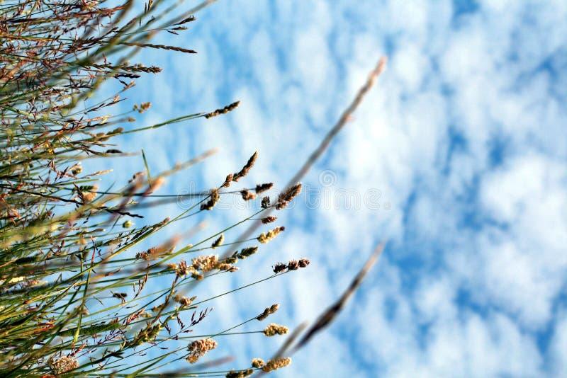 Zone d'herbe d'été photo libre de droits